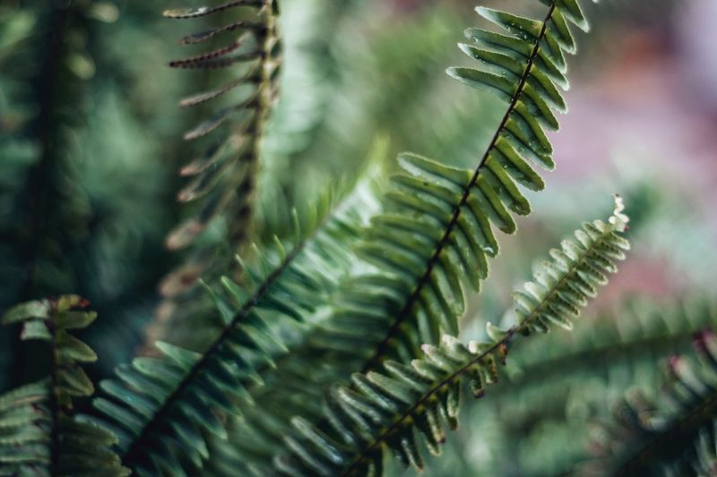 Fern EyeEm Selects EyeEm Gallery EyeEmNewHere EyeEm Nature Lover EyeEm Best Shots EyeEm Botanical Plant Green Color Leaf Nature Growth No People Day Close-up Focus On Foreground Plant Beauty In Nature Fern Tree Branch Freshness Outdoors