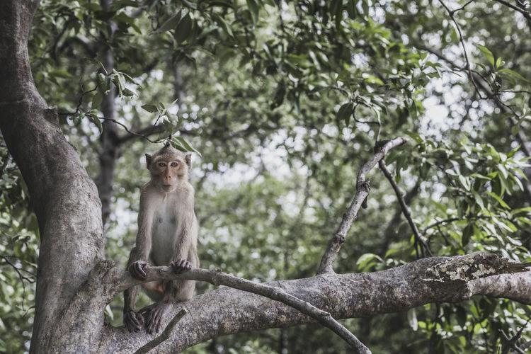Portrait of monkey sitting on tree branch