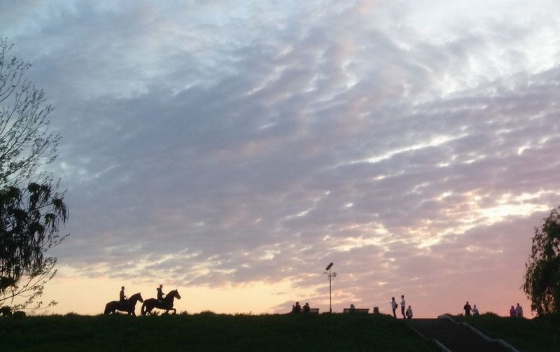 Side View Of Horse Riding On Landscape