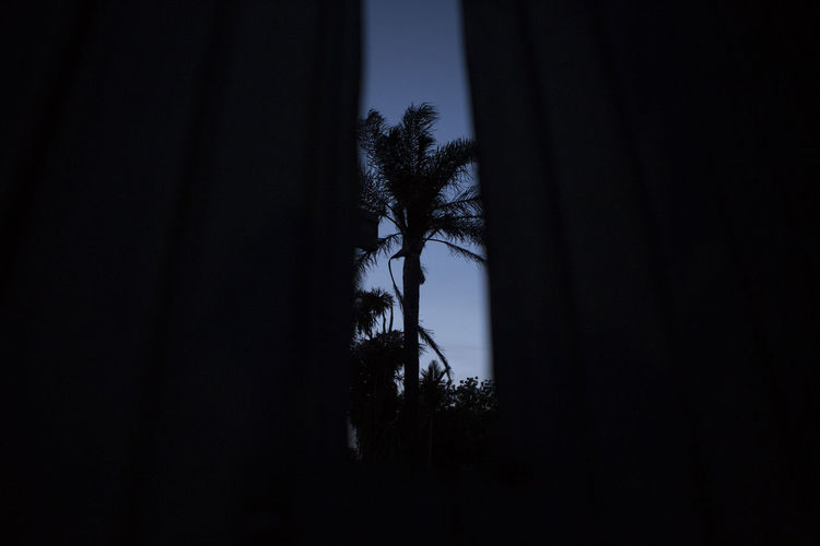 Palm Tree Peep Through Shadows & Lights Silhoette Sky