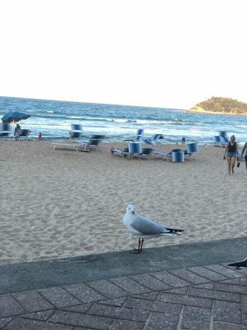 Sea Beach Water Land Bird Vertebrate Animal Themes