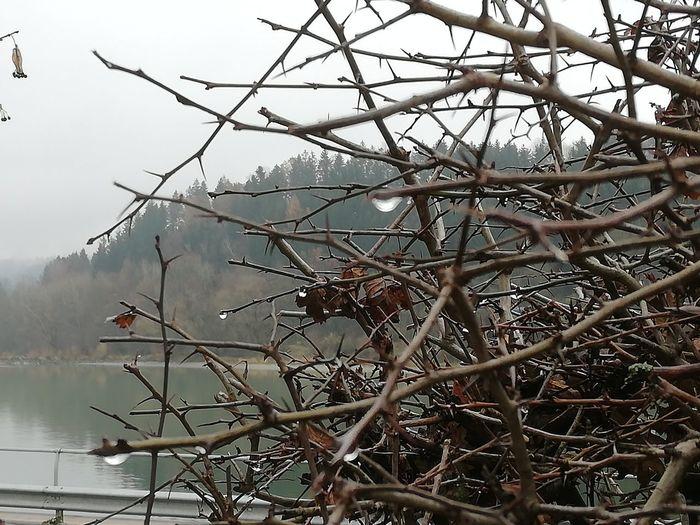 Gestrüpp Tree