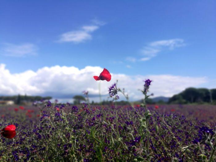 Il mio canto libero Colori Della Natura Cieloazul Piante E Fiori Sopravvivenza Resilienza Azzurro Spring Natura Viva Sospensione Maremma Toscana, Un Paradiso Per Gli Occhi E Per Il Cuore Pensieri In Libertà Volo Via