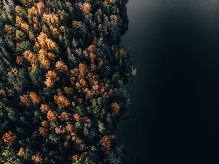 High angle view of forest meeting lake