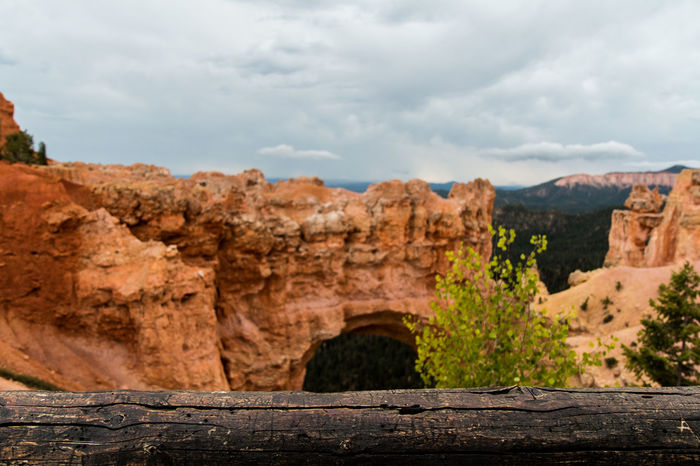 Natural Bridge in Bryce Canyon National Parkwith a close-up of a log of wood, Utah Rock Formation Scenics - Nature Non-urban Scene Rock - Object Geology Landscape Physical Geography Travel Destinations Mountain Range Eroded Climate Formation Beauty In Nature Natural Bridge  Bryce Canyon Bryce Canyon National Park Canyon USA Utah Utah Scenery Utahgram Landscape_Collection Nature Photography Scenic Landscapes Landscape_photography