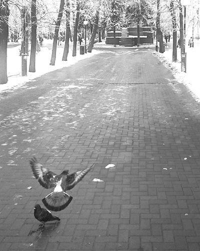 April 20 Mobilephotography Streetphotography Streetphoto_bw Blackandwhite Black And White Monochrome Snow