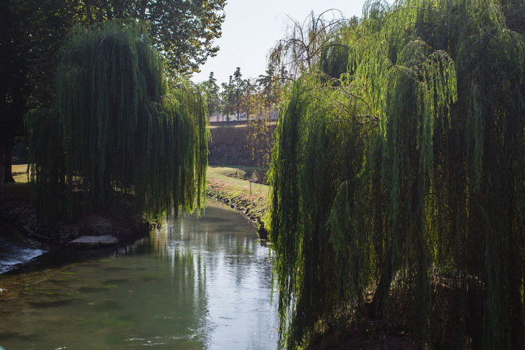 Sallow Sunlight Beauty In Nature Canal Day Green Color Growth Italy Light And Shadow Nature No People Outdoors River Scenics Sun Tranquil Scene Tranquility Water Willow Tree
