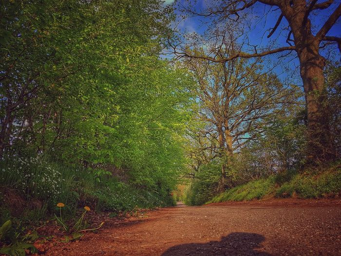 Nature Day No People Grass Outdoors Growth Beauty In Nature Tree HDR Hdr Scape .. Neighborhood Map The Street Photographer - 2017 EyeEm Awards The Great Outdoors - 2017 EyeEm Awards