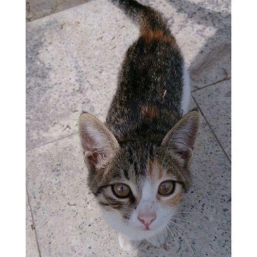 Yeni kedim Lovingcat 😘