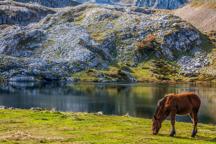 Horse grazing on rock by lake against trees