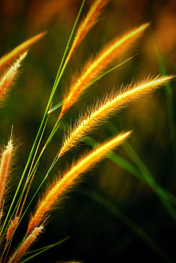 Coarse Grass In