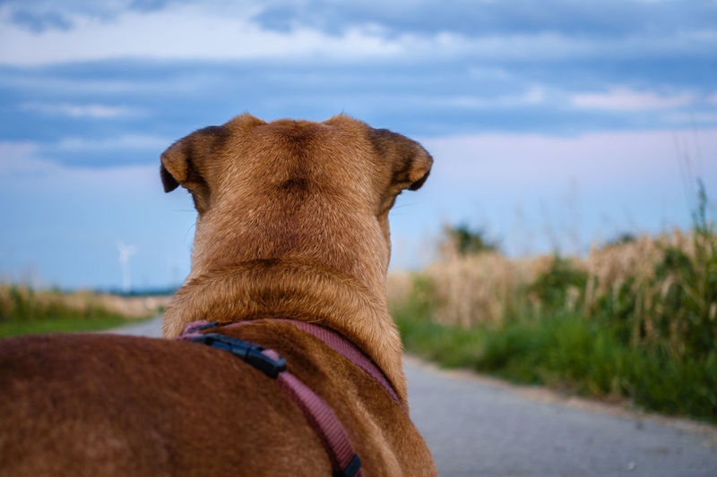 Close-up of a dog on the road
