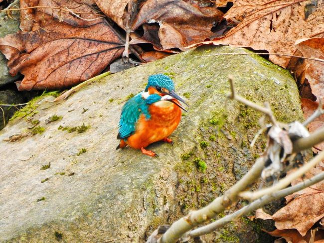 King Fisher Animal Themes Bird Outdoors Animals In The Wild Nature One Animal Beauty In Nature Winter Close-up Animals In The Wild