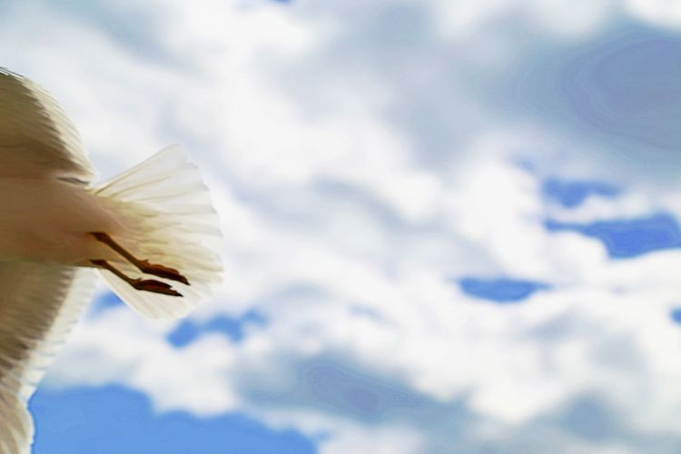 Bye Bye Just Leaving  Animal Themes Animal Wildlife Animals In The Wild Bird Close-up Day Flying Low Angle View Nature No People One Animal Outdoors Sky Spread Wings White Color