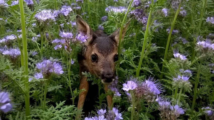 Animal Themes Animals In The Wild Beauty In Nature Close-up Day Domestic Animals Flower Flower Head Fragility Freshness Growth Looking At Camera Mammal Nature No People One Animal Outdoors Plant