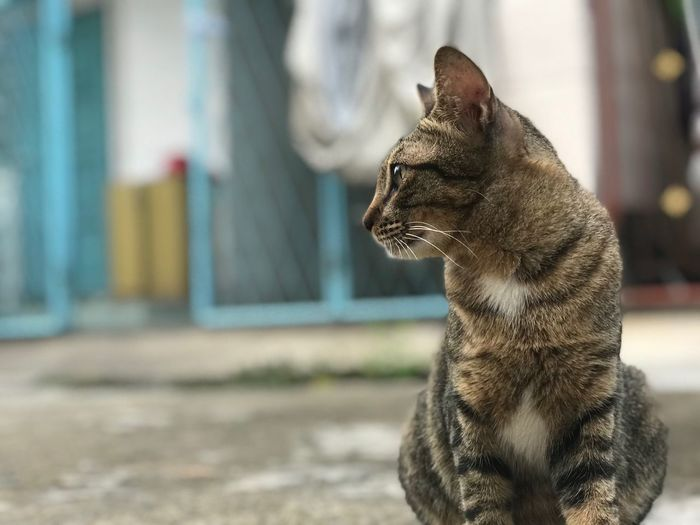 EyeEm Selects Mammal One Animal Animal Themes Animal Focus On Foreground Vertebrate Side View Close-up Looking Day No People Domestic Animals Domestic Cat Cat Whisker Domestic Looking Away Outdoors Pets Feline