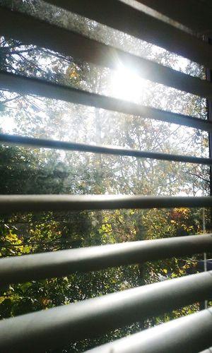 11.17.15 - 9:00 a.m. Good Morning Hello World MorningSunshine Sunshine Nature Raleigh Northcarolina CeBPhotography