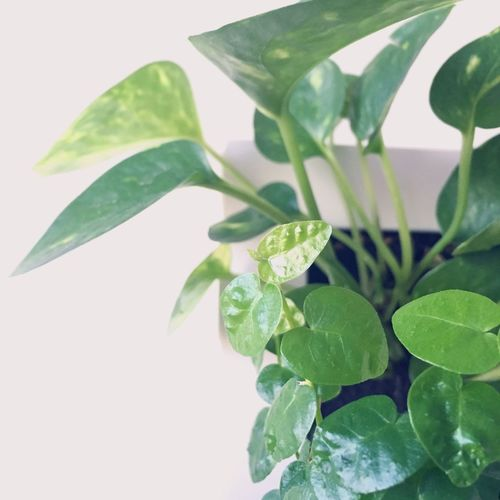Plants Heart Leaves Green Interior Natural