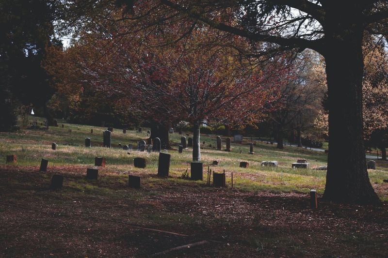 Old cemetery. Tree Sky Grass Tombstone Graveyard Cemetery Gravestone War Memorial Grave Tomb Death Memorial Place Of Burial Cross