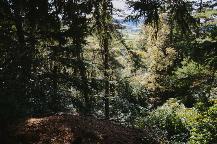 Cragside 4 instagram @dowdd Newcastle Upon Tyne Nikon Beauty In Nature Branch Cragside Day Forest Growth Landscape Mountain Nature No People Northumberland Outdoors Plant Scenics Sky Tranquil Scene Tranquility Tree Lost In The Landscape