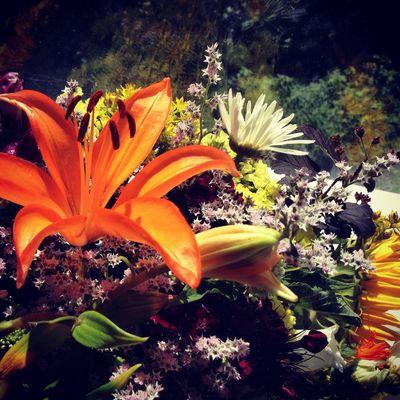 Flowers Blumen Sommer Summer