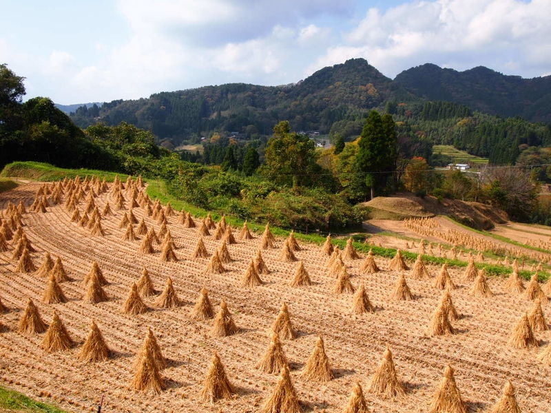Harvest Agriculture Beauty In Nature Mountain Mountain Range Nature No People Outdoors Rice Terraces Sky Takachiho Jap