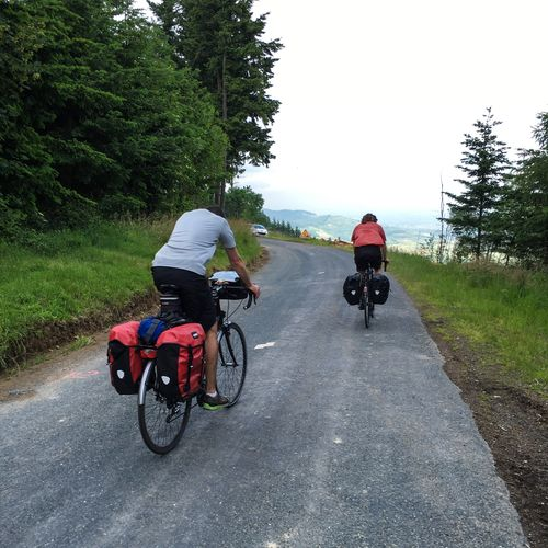 Rear view of male friends riding bicycles on country road