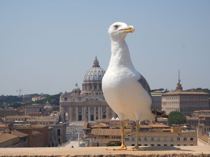 Close-up of seagull perching on city against clear sky