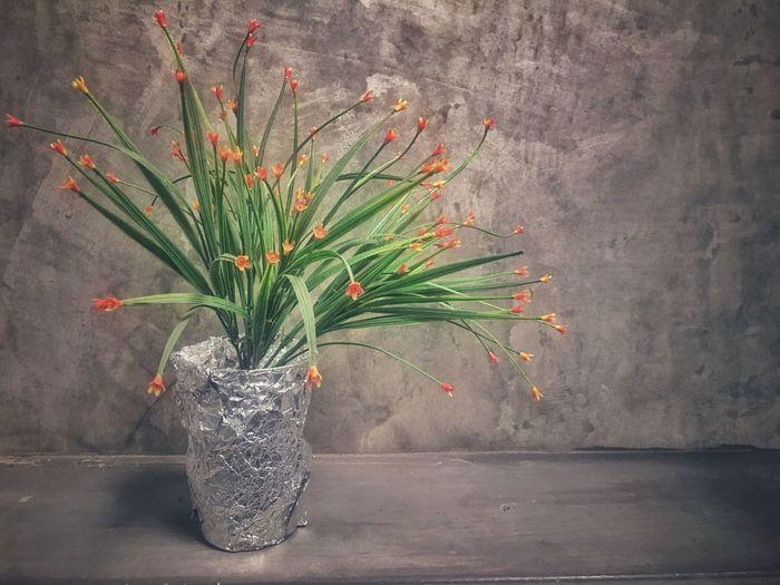 flower Flower Plant No People Flowering Plant Freshness Nature Wall - Building Feature Vase Flower Arrangement