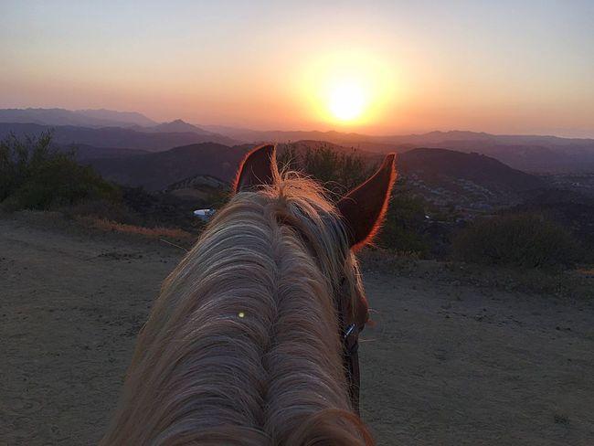 Sunset View Horsebak Ride Sunset Nature Horse Beautiful Nature California Sunset
