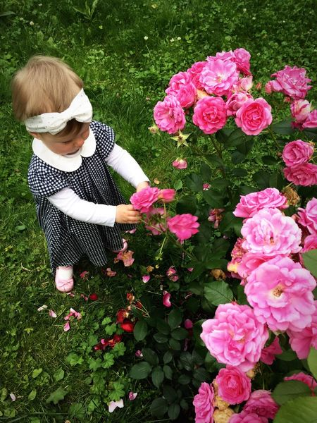 Flower Growth Pink Color High Angle View Full Length Day Childhood Nature Plant Outdoors Freshness Grass Real People People Fragility Blond Hair Florist