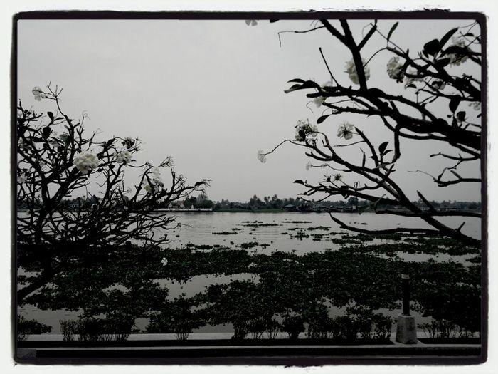 Leelawadee  Waterfront Chaopraya River