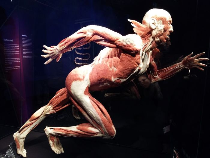 Amazing Human Body Museum Of Humans Travel Destinations Vacations One Man Only Running Man light and reflection Beauty Through My Eyes Berlin
