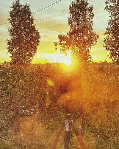Nikon Timelapse Tripod Nature Tree Trees Sunrise Summer Sun Grass