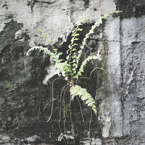 Growth Plant Backgrounds Full Frame Textured  Abstract Paint Day No People Outdoors Close-up