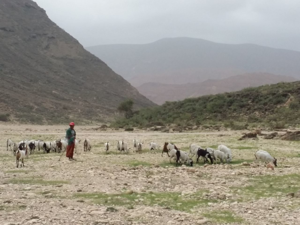 mountain, real people, livestock, domestic animals, men, agriculture, field, mammal, nature, outdoors, large group of animals, landscape, day, one person, women, farmer, rural scene, mountain range, standing, full length, scenics, sky, occupation, beauty in nature, working, adult, people