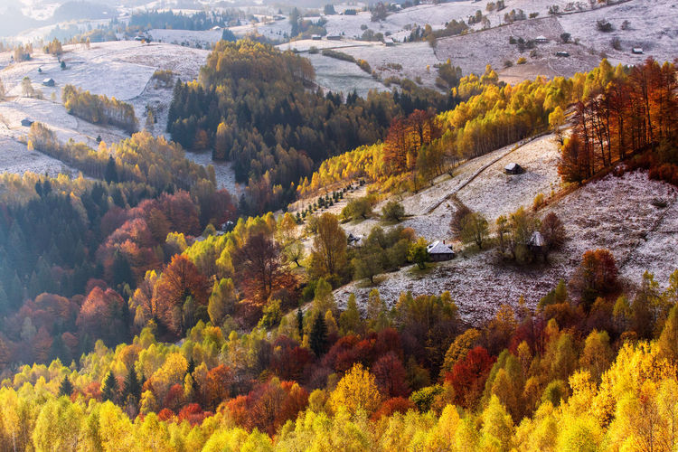 High angle view of trees growing in forest during autumn