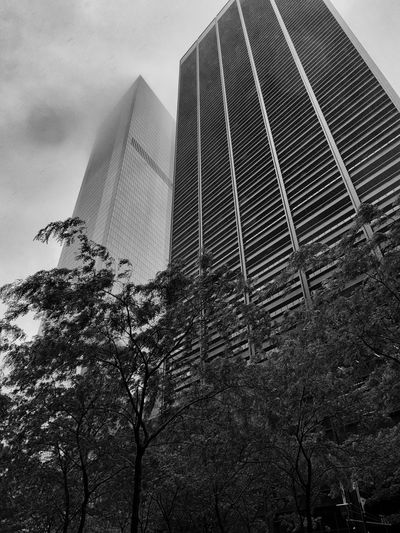 Architecture Building Exterior Built Structure City Day Low Angle View Modern No People Outdoors Sky Skyscraper Tree