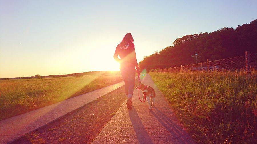 The Great Outdoors - 2017 EyeEm Awards Summer Road Pets Dog Walking Only Women Lifestyles Sunset Sunset Silhouettes Sunset_collection Landscape Beauty In Nature Landscape_Collection Germany🇩🇪 Altmark EyeEm Best Shots Saxonyanhalt Animal Photography Beagle Girlswithdog EyeEm Germany Sourkrauts EyeEmNewHere EyeEm Team