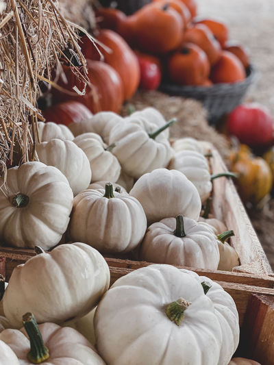 Close-up of pumpkins in market