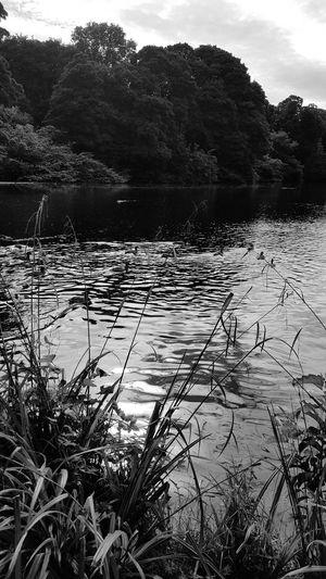 Drumanor Forest, Co.Tyrone First Eyeem Photo Blackandwhite B&w