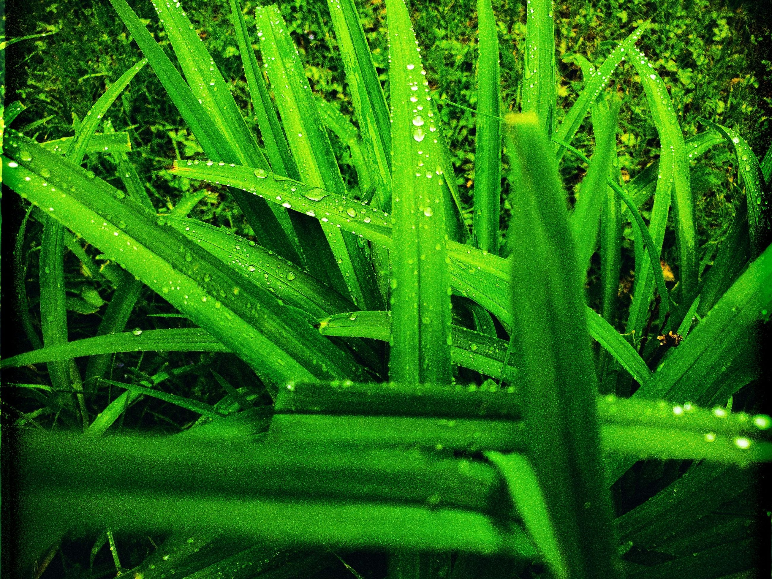 green color, plant, growth, grass, nature, no people, beauty in nature, full frame, blade of grass, water, day, close-up, selective focus, backgrounds, freshness, outdoors, leaf, plant part, tranquility, dew, raindrop