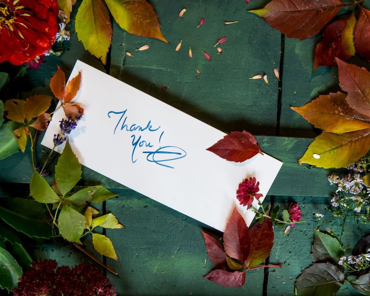 Thank you note on autumn blooming flower and changing color fall foliage background of rustic wood conceptual Thanksgiving and fall celebration thank you card in hand writing on colorful background Note Handwritten Handwriting  Communications Business Finance And Industry Business November October Thank You Card Thank You Plant Part Leaf Art And Craft Creativity Paper No People High Angle View Nature Plant Flower Close-up Day Craft Green Color Text Leaves Still Life Flowering Plant Beauty In Nature Drawing - Art Product