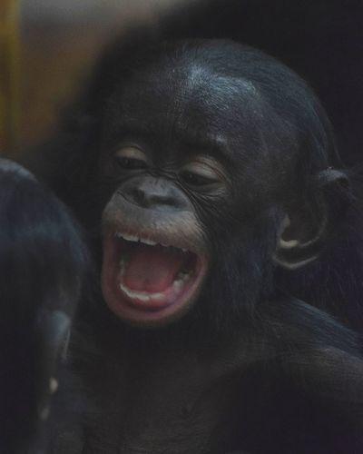 baby bonobo Bonobo Baby Bonobo Bébé Bonobo No People Textured  Close-up Full Frame Day Outdoors Backgrounds Nature