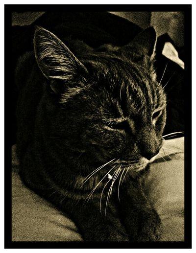 Animal Photography Cats