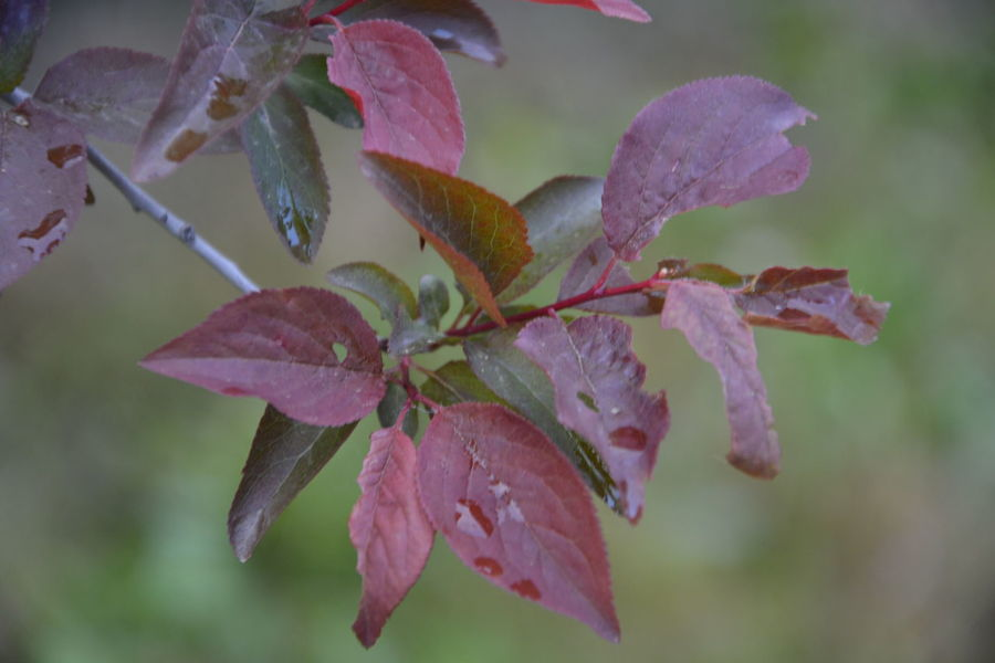 Beauty In Nature Botany Close-up Color Palette Colour Of Life Day Focus On Foreground Fragility Freshness Growth Leaf Leaves Nature No People Outdoors Plant Season  Selective Focus Stem Tranquility