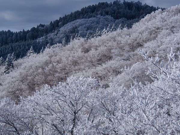 My Winter Favorites 霧氷 金剛山 Snow Mountain White Trees Tree Hike Hoarfrost Trekking Winter Landscape Mountains Landscape_Collection Landscape_photography Outdoors Beautiful Nature Nature Beautiful Japan It's Cold Outside
