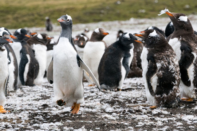 Close-up of penguins on shore