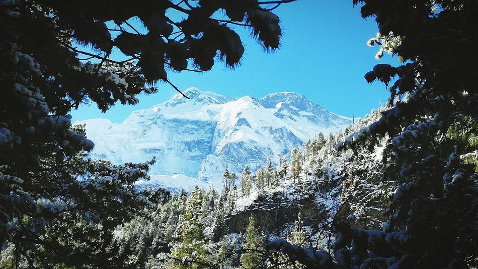 Tree Snow Landscape Beauty In Nature Winter Mountain Cold Temperature Outdoors Sky Nepal Nepal Travel Annapurnacircuit Annapurna Himalayas Topoftheworld Trekking Trekkingpic Picoftheday Amazing Amazingview Been There. Lost In The Landscape