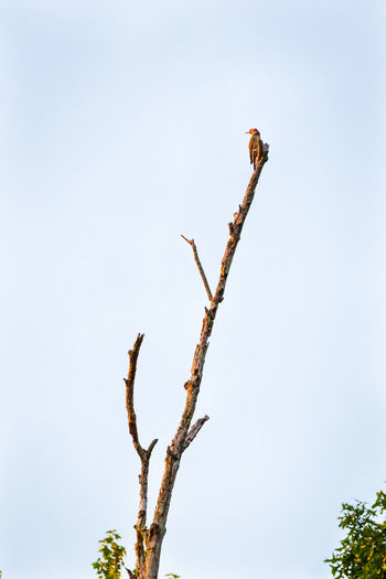Animal Themes Animals In The Wild Beginnings Branch Close-up Dry Environmental Conservation Focus On Foreground Growing Growth Leaf Nature No People One Animal Perching Plant Stem Tropical Climate Twig Wildlife